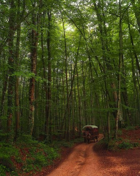 LA FAGEDA D'EN JORDÀ, CATALONIA. Tree Nature Green Color Beauty In Nature Forest No People Tranquility Tranquil Scene Landscape Nature Catalunya Catalonia Landscapes Nature Photography Nature_perfection Naturelover Nature_collection EyeEmBestPics Beauty In Nature EyeEm Nature Lover EyeEm Best Shots Lafagedadenjorda Beech Beech Forest