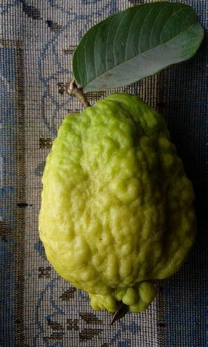 Guava rare