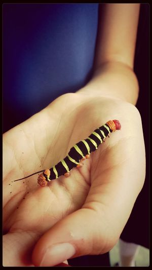 Cute Caterpillar♥♡