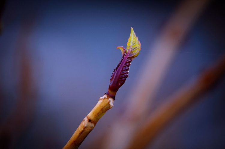 Spring Is Coming  Buds On Branches New Shoots🌱 Plant Close-up No People Nature Outdoors Day