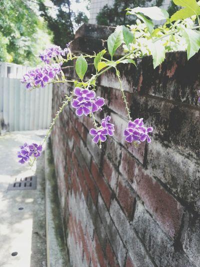 Taking Photos Flowers#nature#hangingout#takingphotos#colors#hello Worldflorafauna F Enjoying Life
