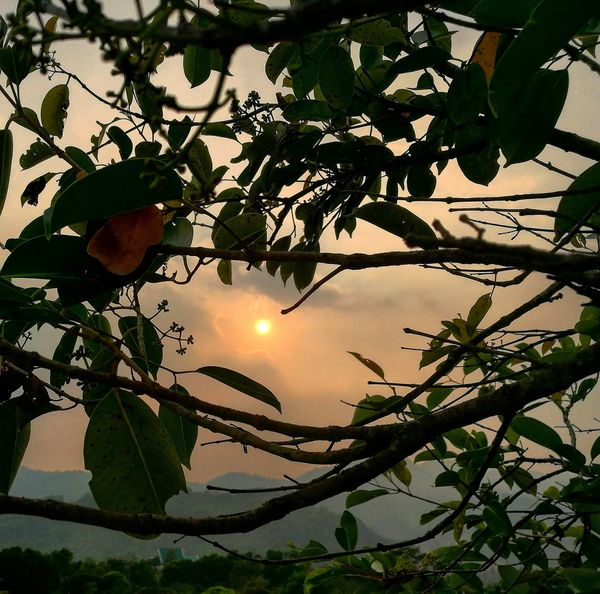 Peeking at sunset Sunset_collection Sunset And Trees Sunset Mountains Nature Beauty In Nature Trees And Nature Trees