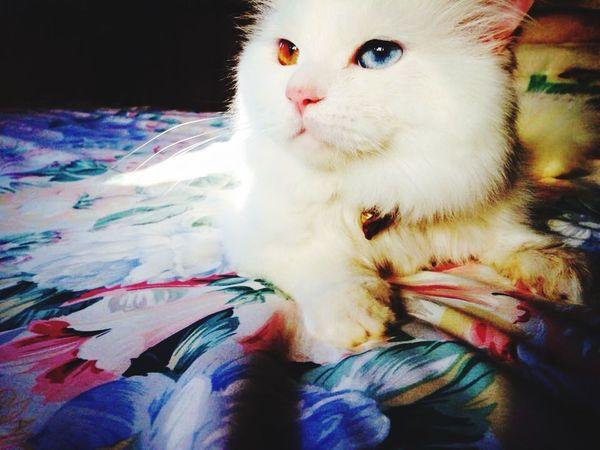 Love Cat♡ Happiness Beautiful Beauty Persiancat