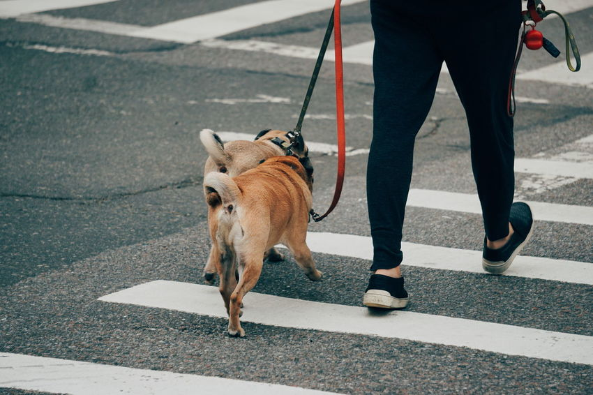 50+ Walking The Dog Pictures HD | Download Authentic Images