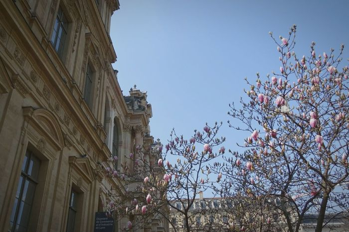 Urban Landscape Lyon Printemps Bourgeons