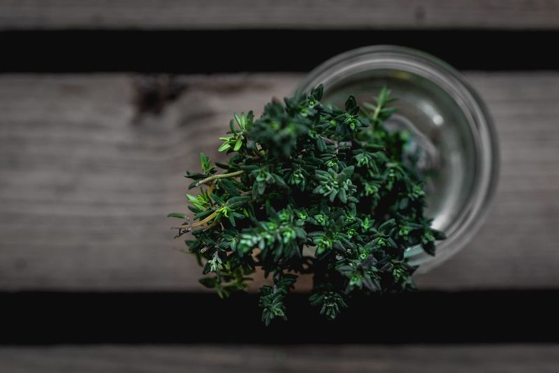 Directly Above Shot Of Thyme In Glass Jar
