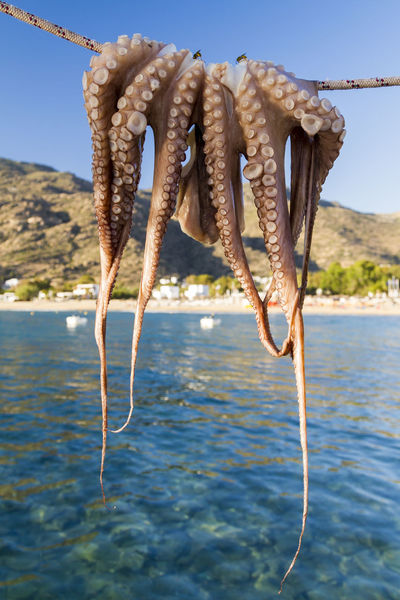 Fresh octopus drying in the Mediterranean sun on the Greek island of Ios. Food And Drink Fresh On Eyeem  Fresh Produce Greek Islands Sqid Sunny Vacations Animal Themes Beauty In Nature Close-up Day Fishing Food Foodphotography Greece Hanging Medeteranian Sea Nature No People Octopus Octopus Tentacle Outdoors Sea Sky Water