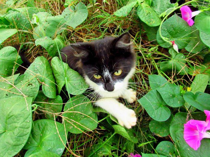 kitten in the