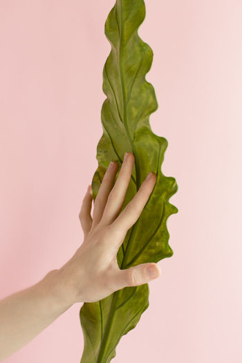 Close-up of hand holding leaf over white background