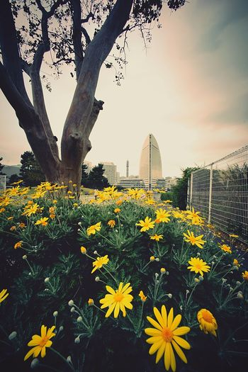 Yellow Flower Flowers Cityscapes Urban Landscape Landscape Walking Around Super Wide Angle 広角機動隊 Snapshot Taking Photos