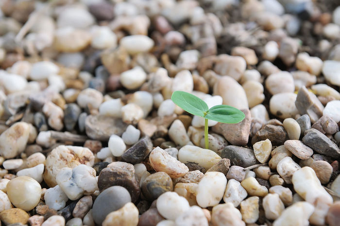 Close-up Day Food Fragility Freshness Green Color Growth Leaf Nature New Life No People Outdoors Pebble Pebble Beach Plant Sapling