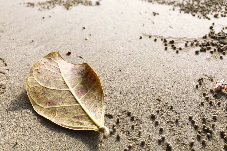 High angle view of dry leaf on sand