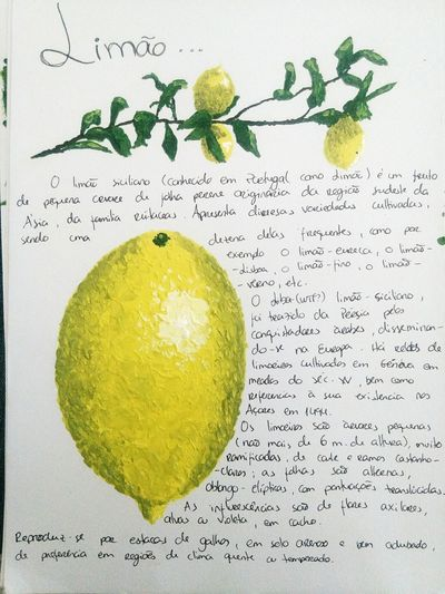 Studies Lemon Yellow Fruit Art Painting Acrylic