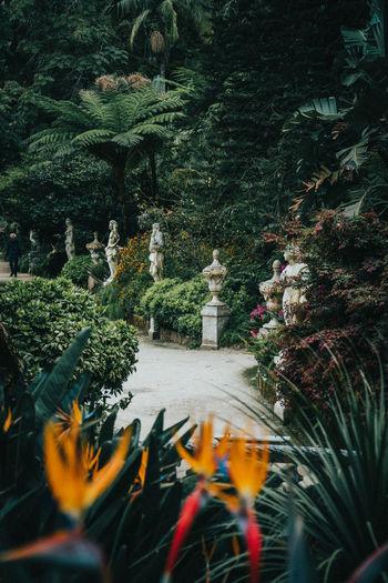 Statue of flowering plants in park