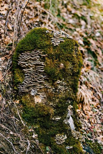Close-up of mushroom growing on tree trunk