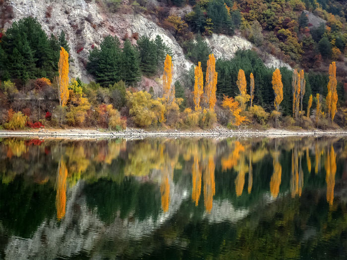 Reflections of autumn colored trees in lake waters. Reflection Water Tree Lake Plant Beauty In Nature Autumn Scenics - Nature Waterfront Nature Tranquility No People Tranquil Scene Change Growth Non-urban Scene Day Orange Color Idyllic Outdoors Autumn Collection