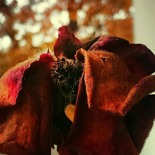 The color of autumn Nature_collection The Street Photographer - 2014 EyeEm Awards On The Road Beautiful Nature