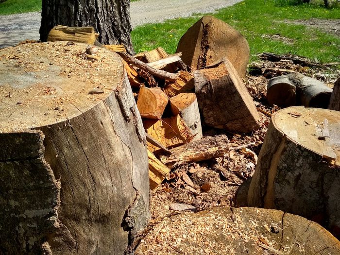 Stack Sunlight Deforestation Forestry Industry Log Lumber Industry Environmental Damage Tree Stump Tree Ring Woodpile Environmental Issues Pile