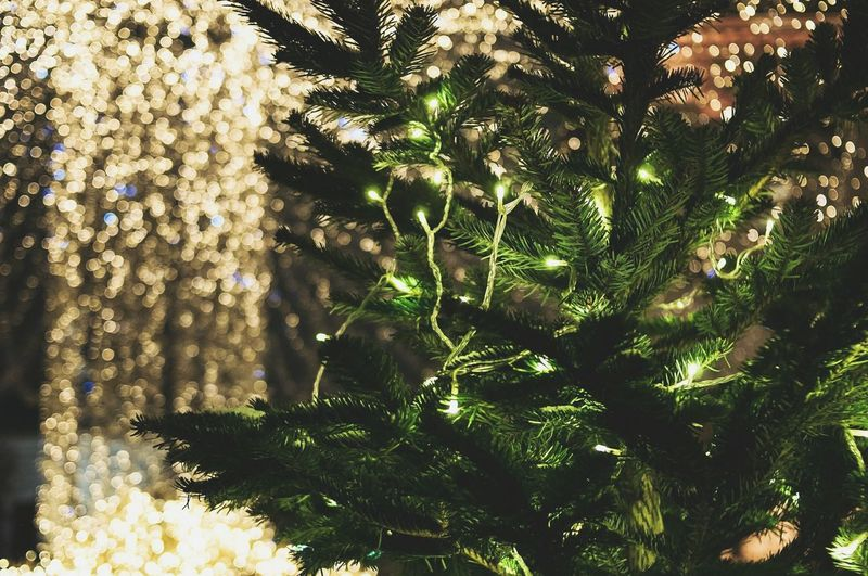 Tree Nature No People Green Color Outdoors Close-up Night Christmas Time Christmas Around The World Christmas Lights New Year's Eve Winter Russian Tradition Russia Christmas Decoration Illuminated Nightlife Christmas New Year Around The World New Year Fair Arts Culture And Entertainment Tree Christmas Tree