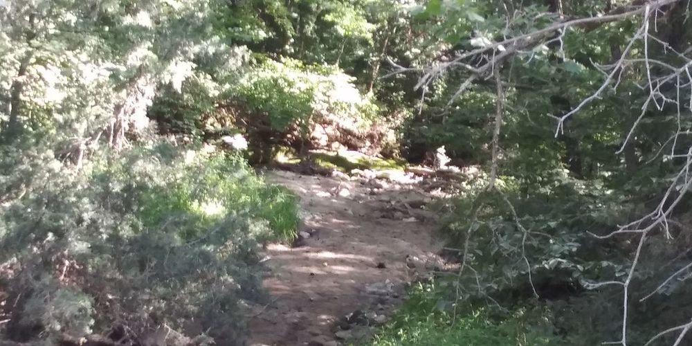 Tree Water High