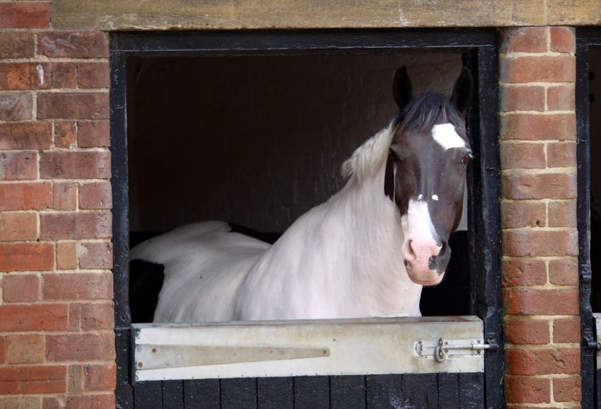 Animal Themes Building Exterior Built Structure Domestic Animals Horse No People Piebald Stable Stable Door