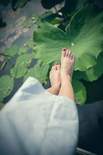 A beautiful young woman sitting besides the lotus. One Person Women Real People Lifestyles Leisure Activity barefoot Low Section Human Leg Human Foot Relaxation Human Body Part Nail Polish Body Part Adult Personal Perspective Nature Day Nail Red Nail Polish Outdoors Toenail Feet Leaf Lotus Water Lily