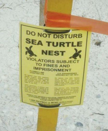 Sea turtle nest site. Sea Turtle Nesting Do Not Disturb On The Beach Orange Tape Anna Maria Island Outdoor Photography Florida Save The Turtles Save The Planet