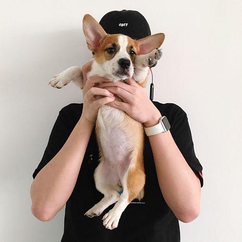Woman holding dog against white background