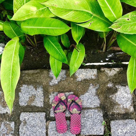 Travel in peace. Alone but not lonely. Leaf Growth No People Travel Onetheway Selfcare Peaceful Flipflops Havaianas Lieblingsteil
