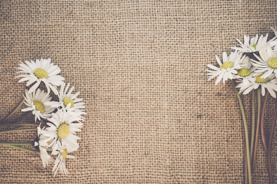 floral still life - rough hemp fabric Beauty In Nature Close-up Daisies Fabric Floral Flower Flower Head Fragility Freshness Growth Hemp In Bloom Jute Nature No People Petal Pollen Rough Texture Softness Still Life Top Perspective Top View White White Color