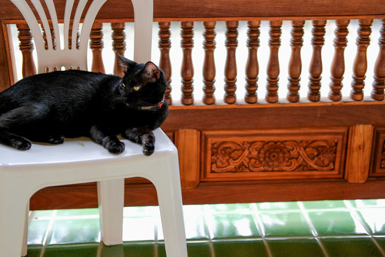 Black cat sitting on chair at home