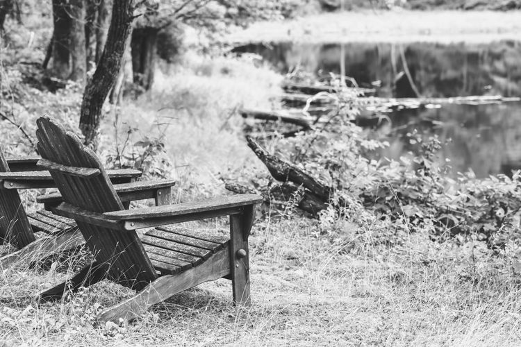 Empty adirondack chairs by wooded pond