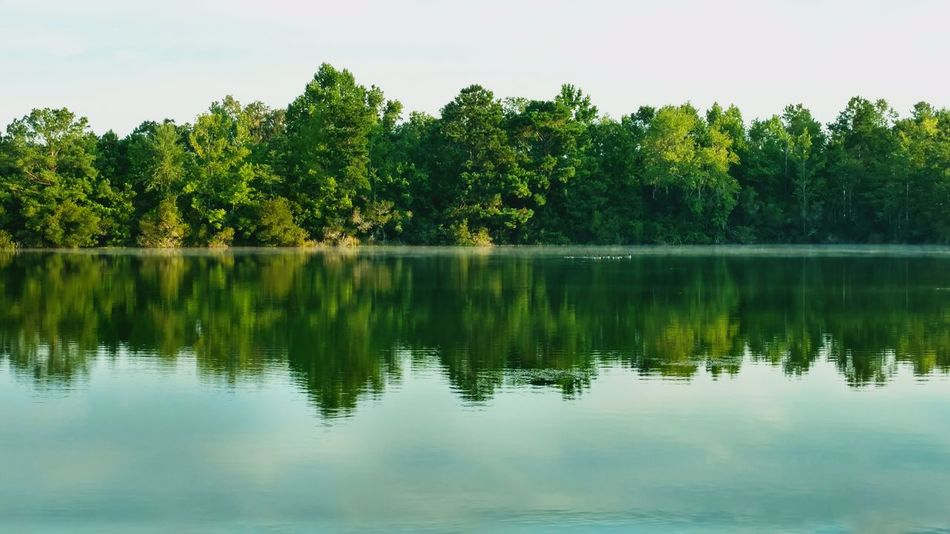 Early Mist On The Lake! Ducks In The Lake Reflection Tree Tranquility Beauty In Nature Tranquil Scene Outdoors Scenics Water Lake Nature Symmetry Sky Day No People Animal Themes Beauty In Nature