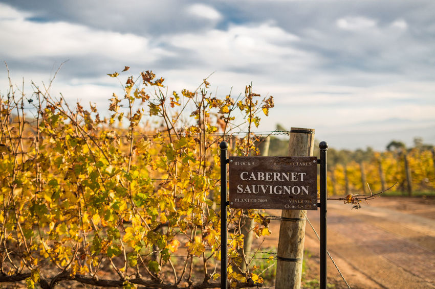 Winefields Beauty In Nature Cloud - Sky Communication Day Field Flower Freshness Growth Nature No People Outdoors Plant Scenics Sky Text Welcome Sign Western Script Winery