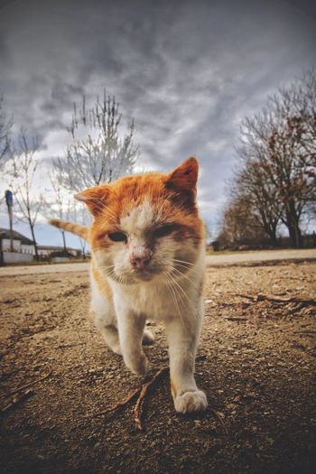 Cat in a field