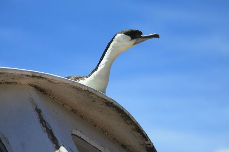 Low angle view of bird against clear sky
