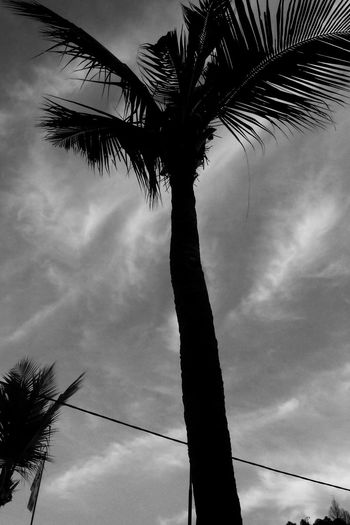 Beauty In Nature Palm Tree Sky Outdoors Tree Silhouette No People Low Angle View Cloud - Sky Day Nature