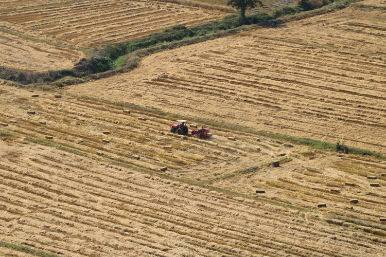 Aerial View Agriculture Beauty In Nature Combine Harvester Day Farm Farm Life Farmland Field High Angle View Land Vehicle Landscape Nature Outdoors Rice Field Rural Scene Scenics Technology Tractor ฟาร์มข้าว กับรถไถนา