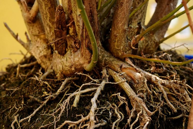 Roots Roots Of Tree Life Roots Of Life Nature Tree Plants 🌱