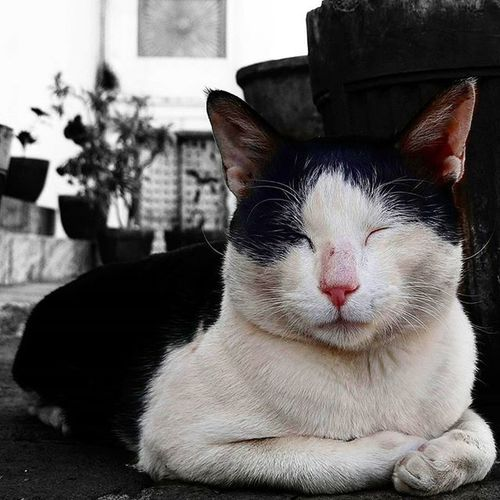 Put that camera away hooman.! Udaipur Udaipurblog Cat Catlove Catsareweird Hooman Desi_diaries Indiaclicks Indiapictures Onceinawhile Breakthecode _csi