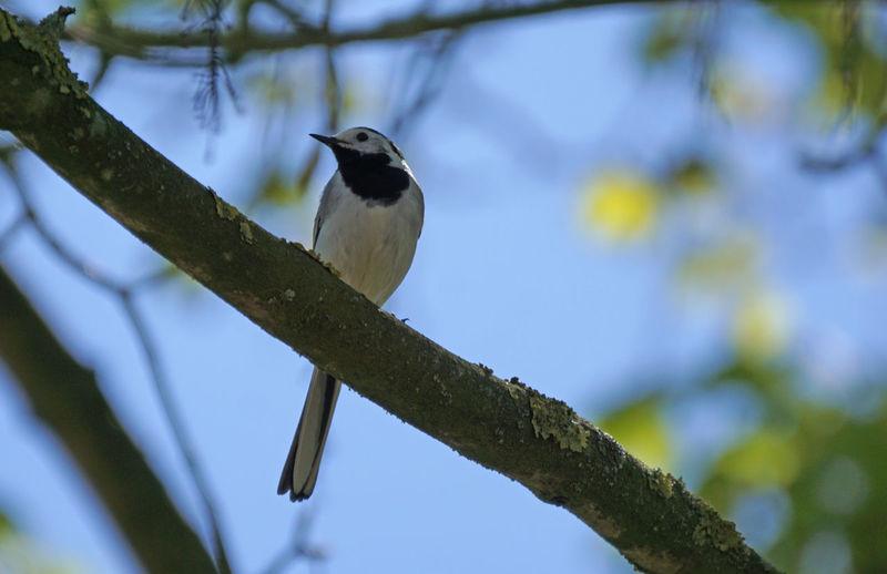 Vögel/Birds