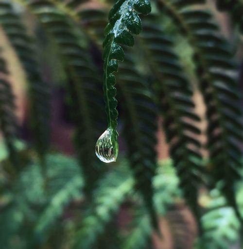 Into each life some rain must fall. Raindrops Macro Fern Green Nature Rain IPhone IPS2016Closeup