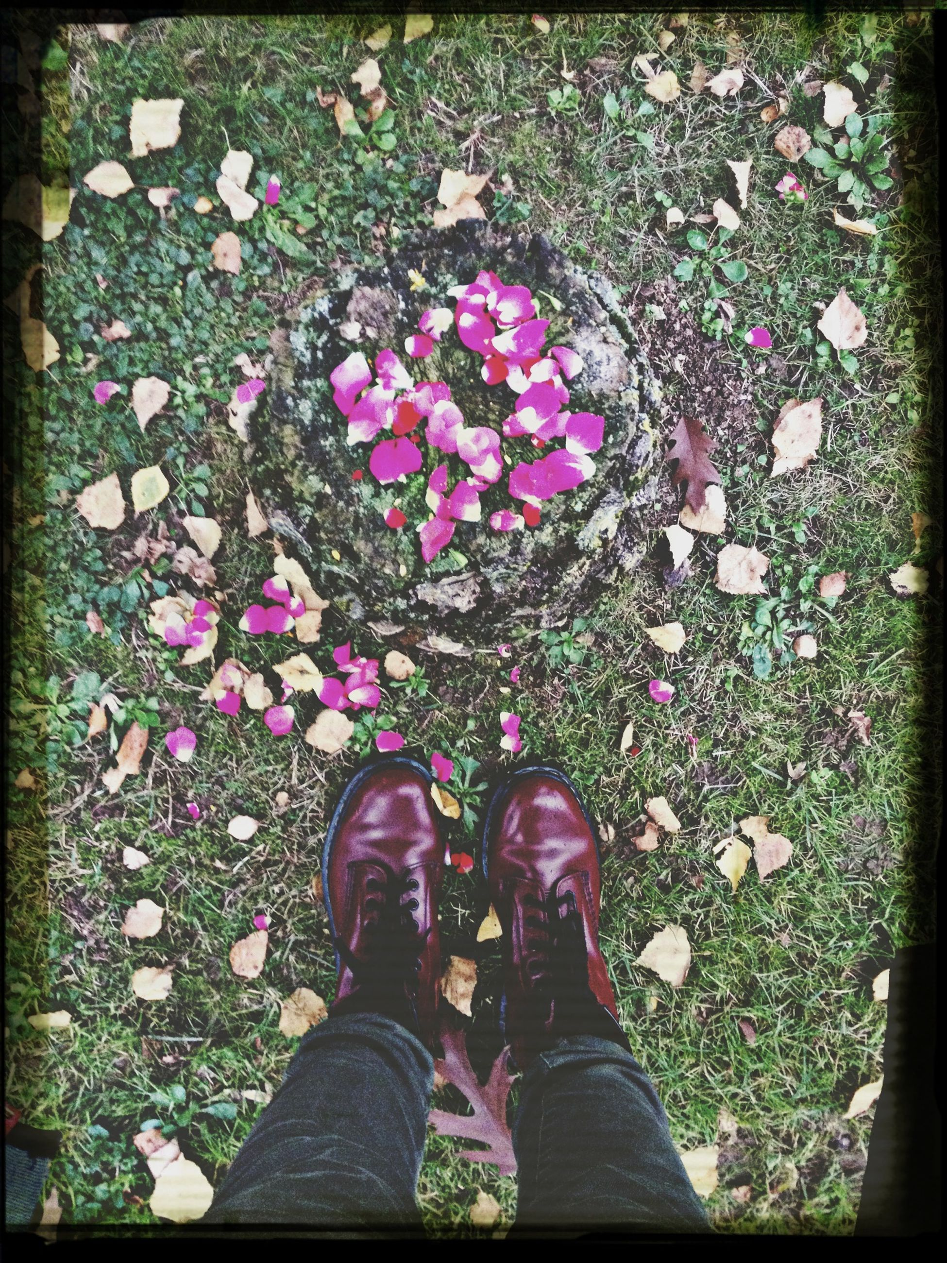 flower, low section, person, lifestyles, high angle view, leisure activity, grass, field, shoe, transfer print, standing, auto post production filter, men, fragility, human foot, nature