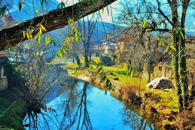 Triavna Water Tranquil Scene Tree Trunk River Thames Canal Beauty In Nature интересни места в България Трявна
