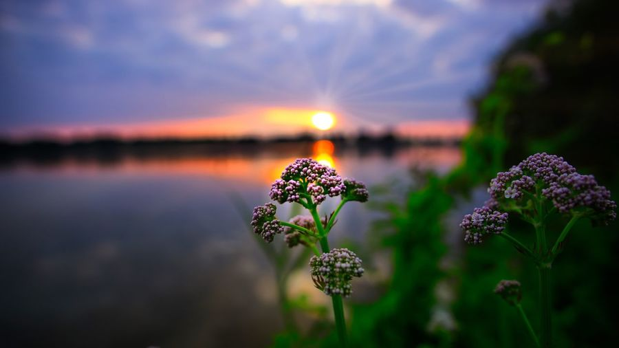 Let the thoughts Dream Samyang 12mm F2 Samyang Salzgitter Salzgittersee Niedersachsen Flowering Plant Flower Beauty In Nature Sky Sunset Water Cloud - Sky Nature Scenics - Nature