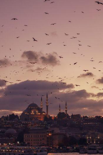 Flock of birds flying over city buildings