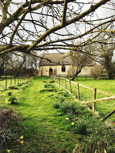 Church Grass