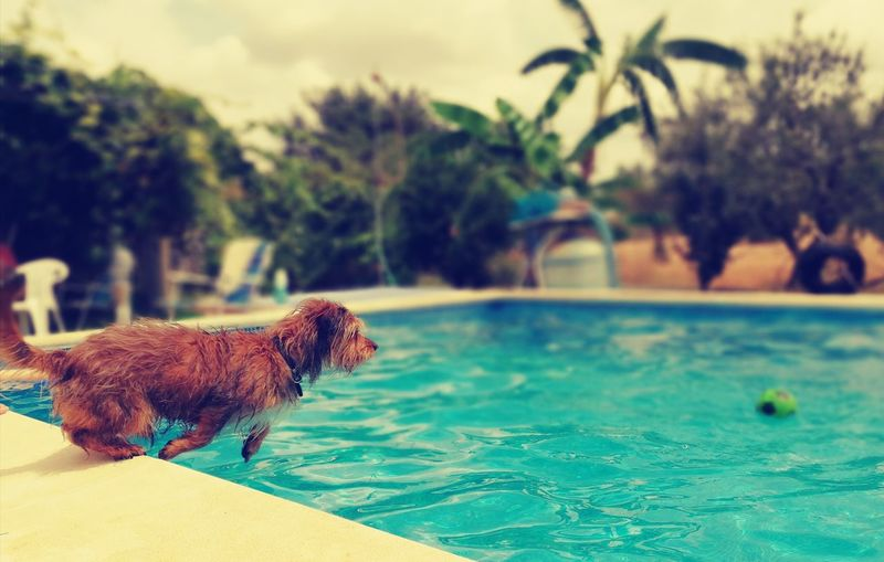 Dog in swimming pool against sky