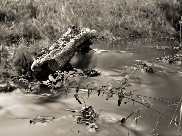 Water Reflection Day Outdoors No People Nature TreesAndWater Eye4photography  EyeEmBestPics EyeEm Best Shots Black & White