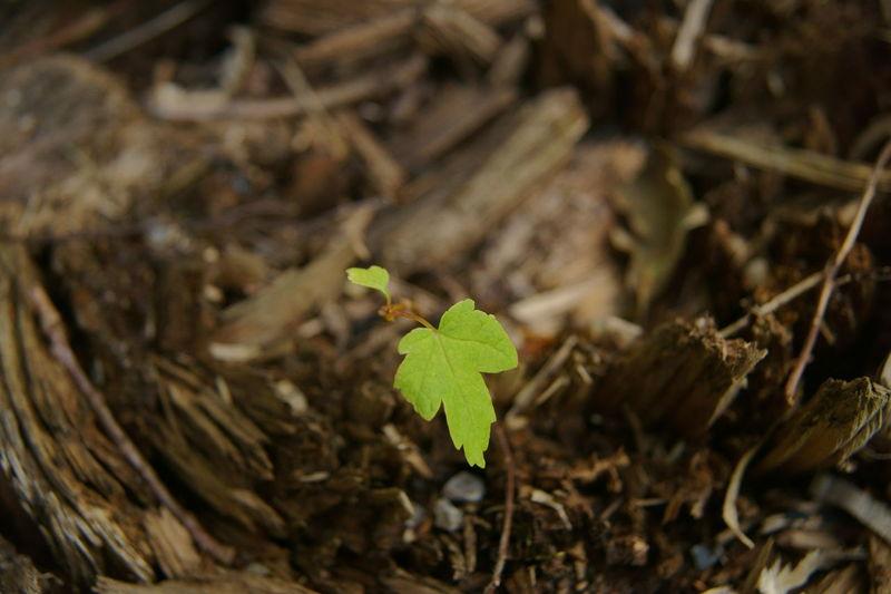 Leben beginnt auch dort wo es aufgehört hat Blatt Baum Baumstamm Leben Neu Wachsen Aus Alt Mach Neu